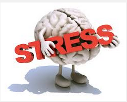 stress cerveau